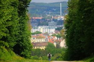 Abbildung 2: In Österreich überwiegen die Mietwohnungen